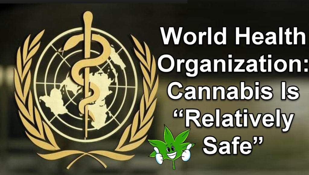 """World Health Organization: Cannabis Is """"Relatively Safe"""" WHO Slams USA For Having a Schedule 1 Listing"""