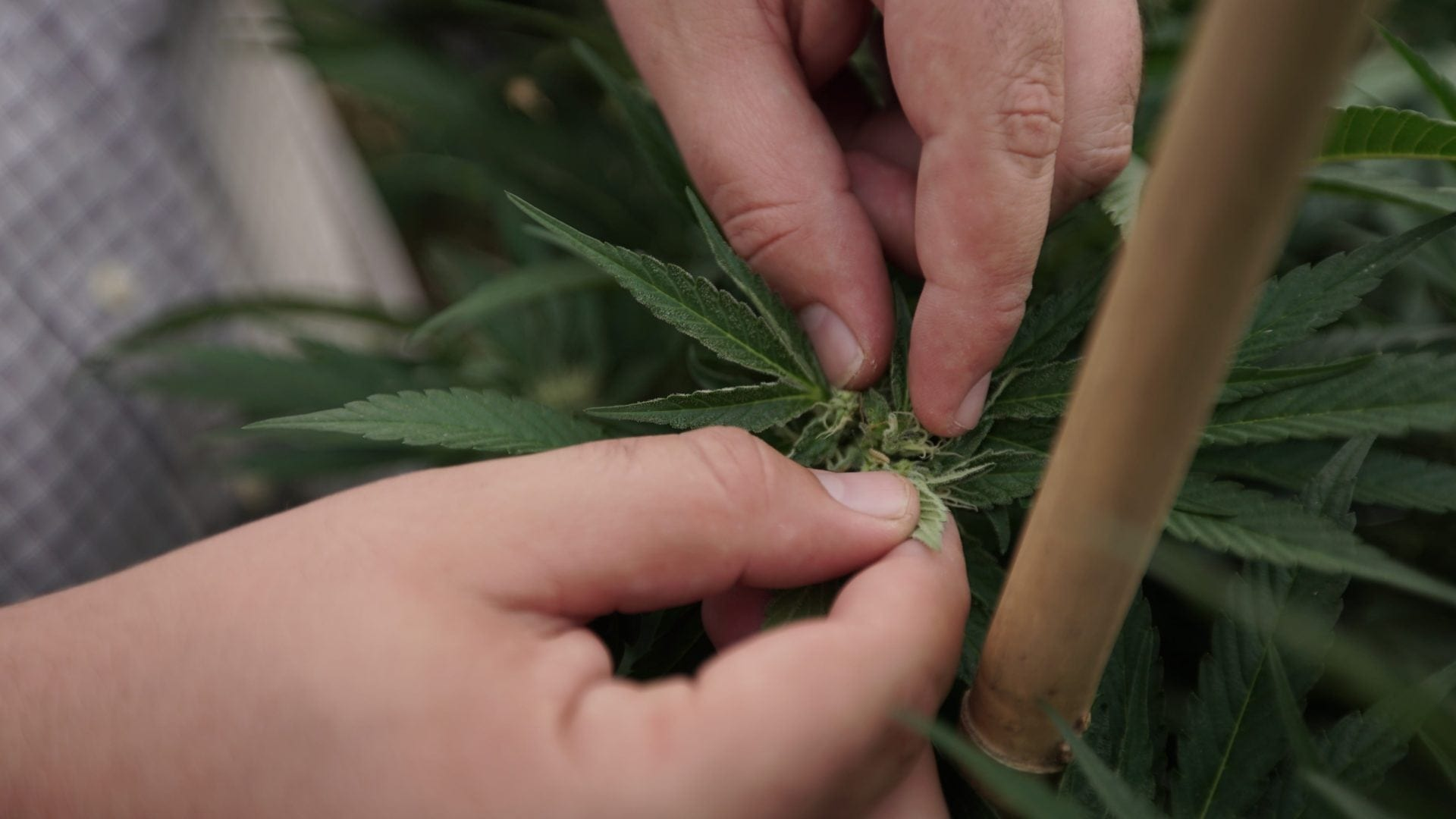 Here Are The DEA's Newest Slang Terms for Marijuana: 'Shoes,' 'My Brother' And More