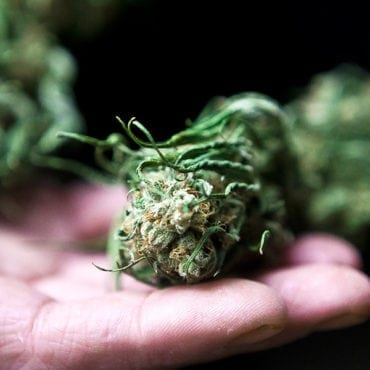 Widows Support Cannabis for PTSD, as Congress Introduces Bill to Legalize Pot for Veterans