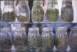 Pot in the workplace: Oregon is No. 1 for positive drug tests