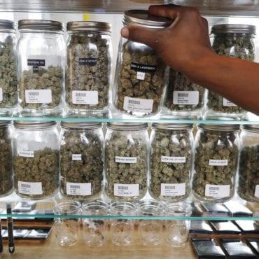 Placing jars of cannabis on shelf.