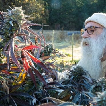 Long Bearded Hippie