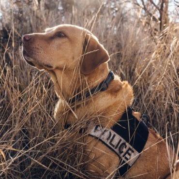 Police Drug Sniffing Dog