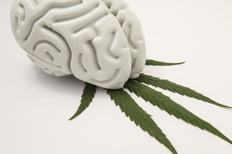 Parkinson's Foundation to Host First Marijuana Conference in Denver