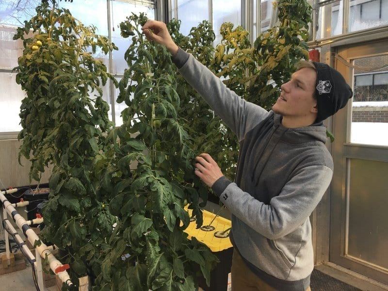 Higher education: Colleges add cannabis to the curriculum