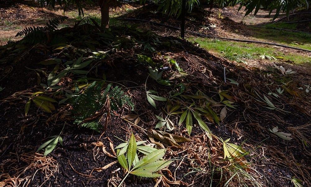 Spring Tips: How to Prep Your Home Garden to Grow Cannabis