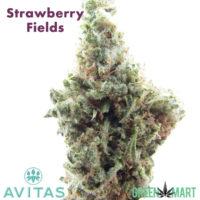 Avitas - Strawberry Fields