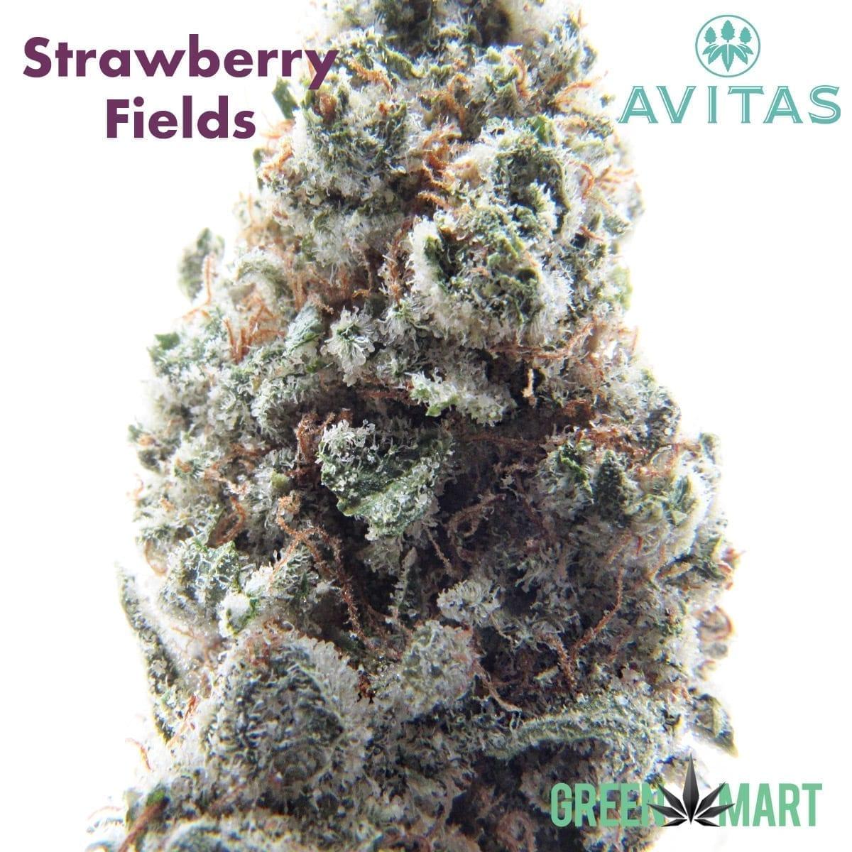 Strawberry Fields by Avitas