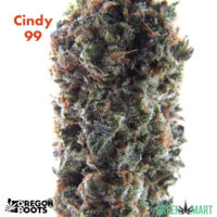Cindy 99 Grown By Oregon Roots