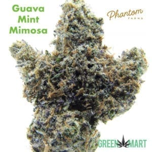 Guava Mint Mimosa by Phantom Farms