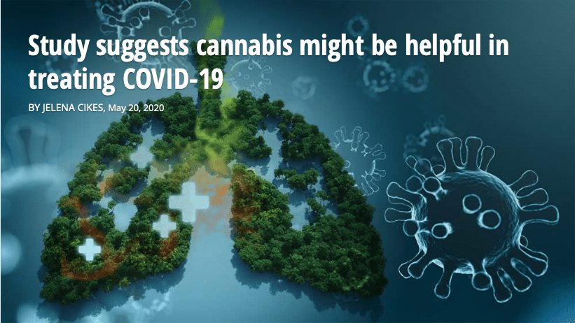 Study suggests cannabis might be helpful in treating COVID-19