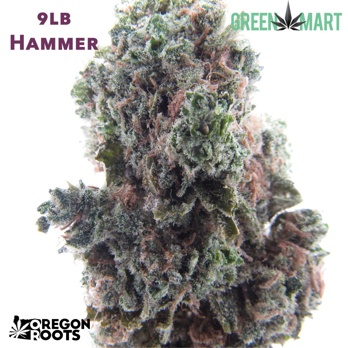 9# Hammer